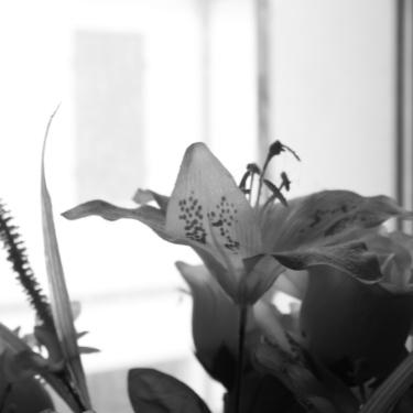 bianco e nero 2