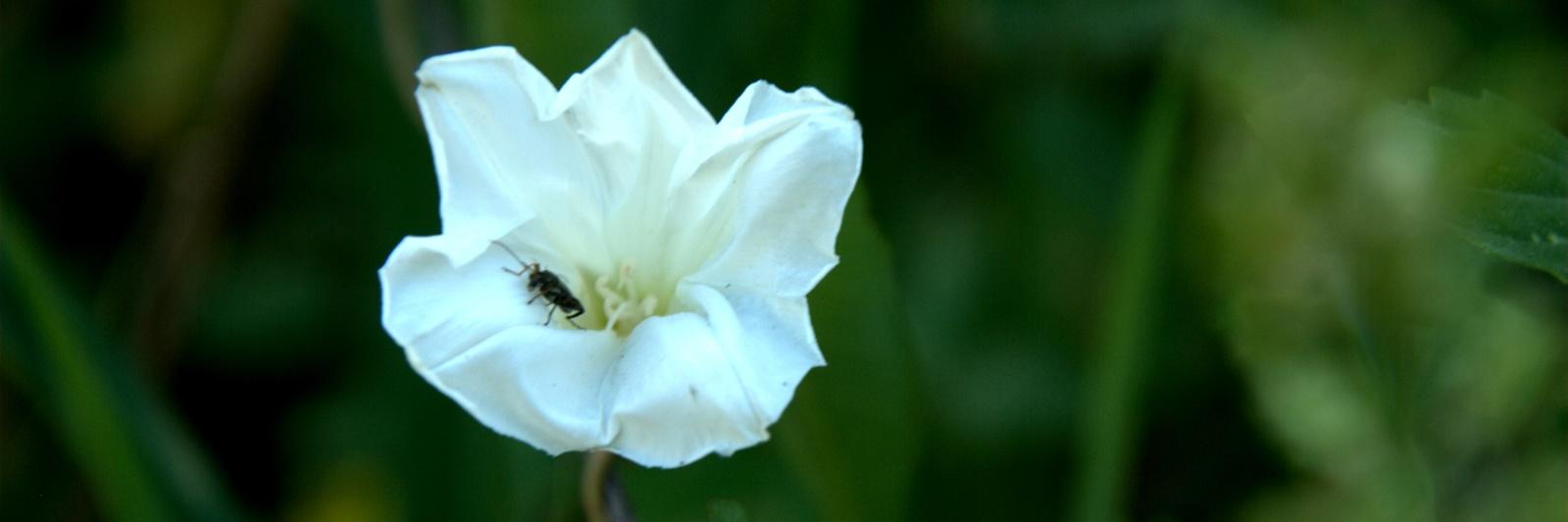 fiore dis-immacolato