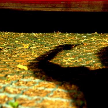 In ogni ombra