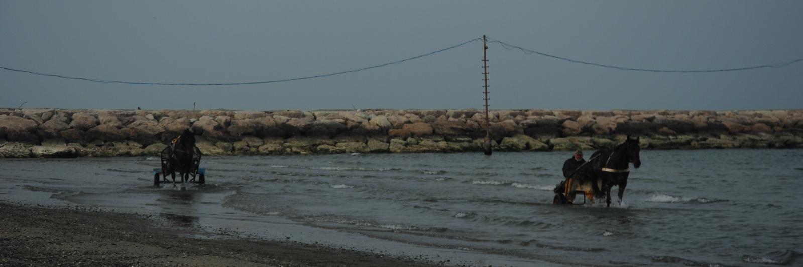 Cavalli - Marina Romea (RA) Aprile '19