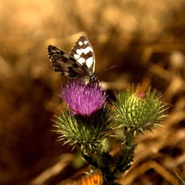 the best between butterflies, bees and others...