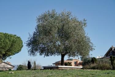 Parco Guido Rossa - Settecamini