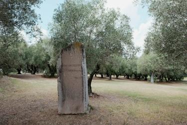 Il Parco della Pace alla Pisana